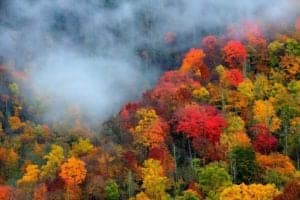 Fall colors in the trees in the Smoky Mountains.